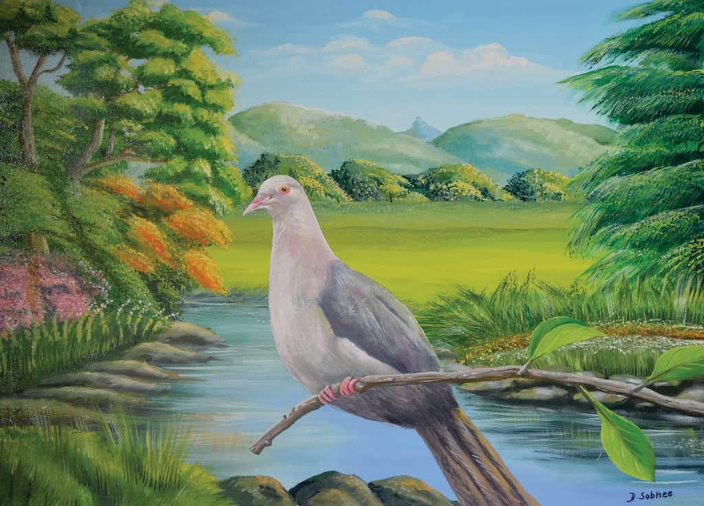 mauritian-artist-dinesh-sobhee-pink-pigeon