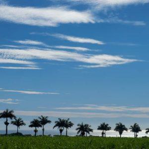 mauritius-arts-catherine-li-sage-comme-des-palmiers-en-rang