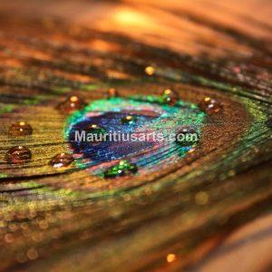Mauritius Arts & Artists - Shivagaami-Lutchmanen-Plume-Paon