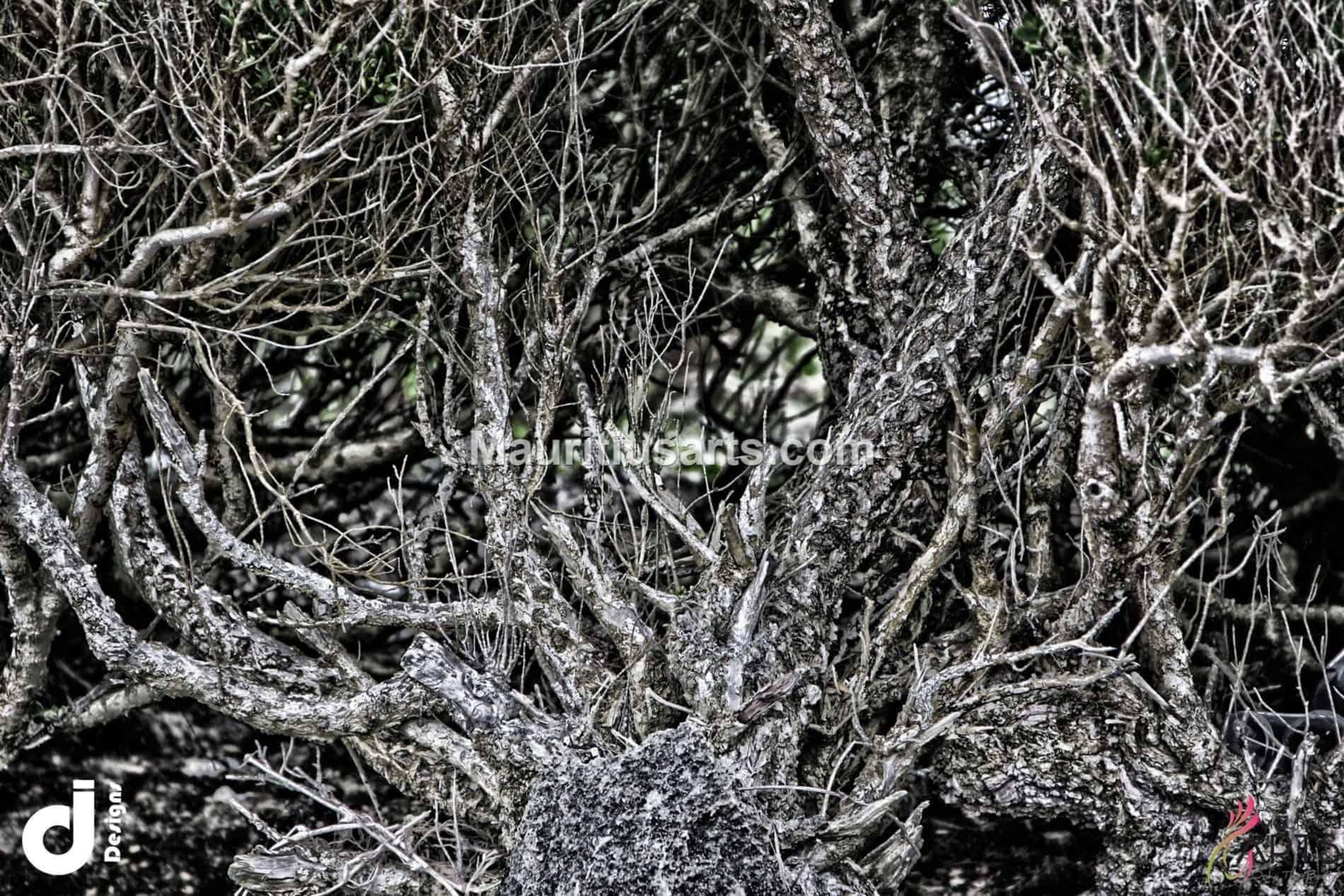 mauritius-arts-djunaid-jeetoo-tangle