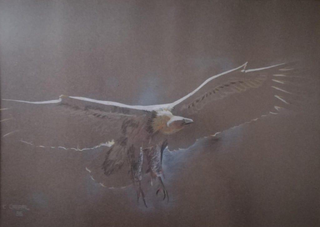 mauritius-arts-carlos-cabral-vulture
